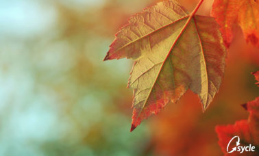 9 Must-Read Audiology Articles for Fall image