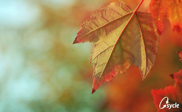 10 Must-Read Audiology Articles for Fall image